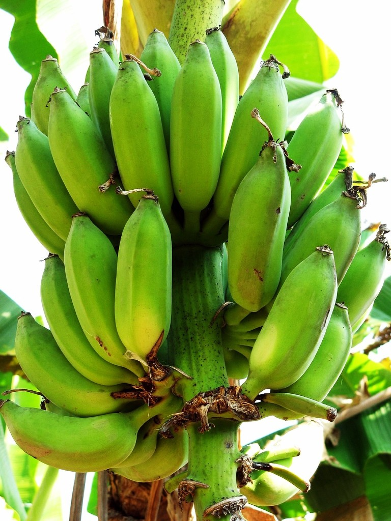 Green_Plantains